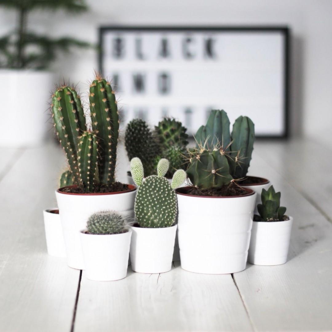 inspiration-deco-plantes-vertes-cactus-FrenchyFancy-2-1080x1080