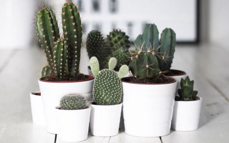 deco_cactus_tendance_decoration-decocot